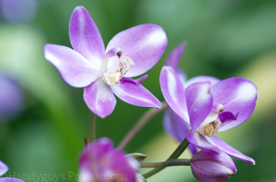 flowers-at-longwood