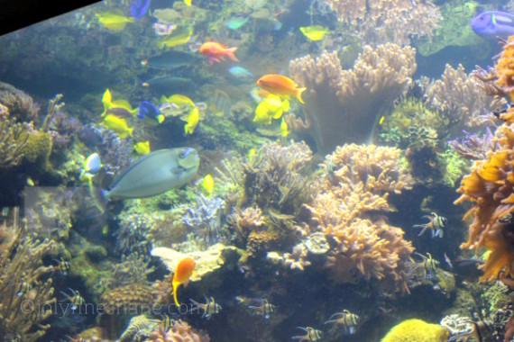 Fish at National Aquarium Baltimore
