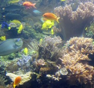 Experiencing the National Aquarium Baltimore