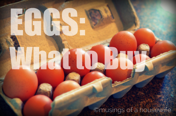 eggs-what-to-buy